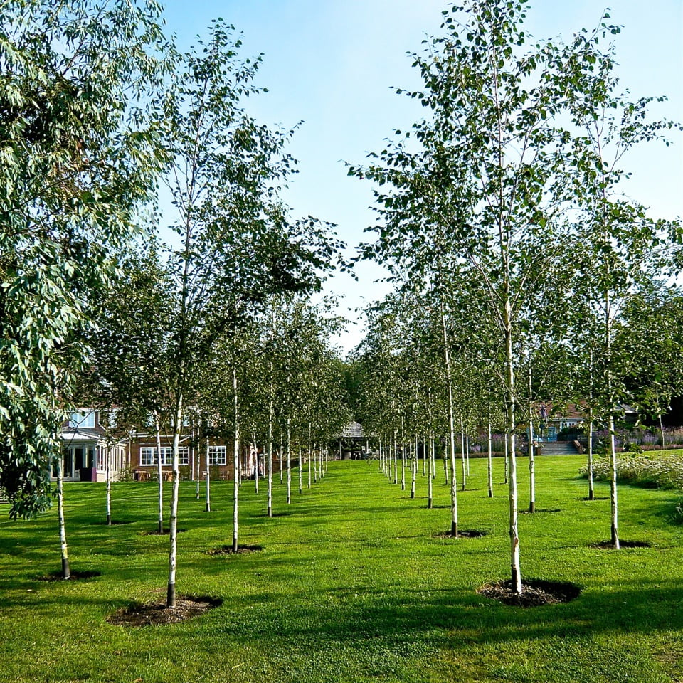 Joanne_Alderson_Garden_Design_Oxfordshire_Estate_3