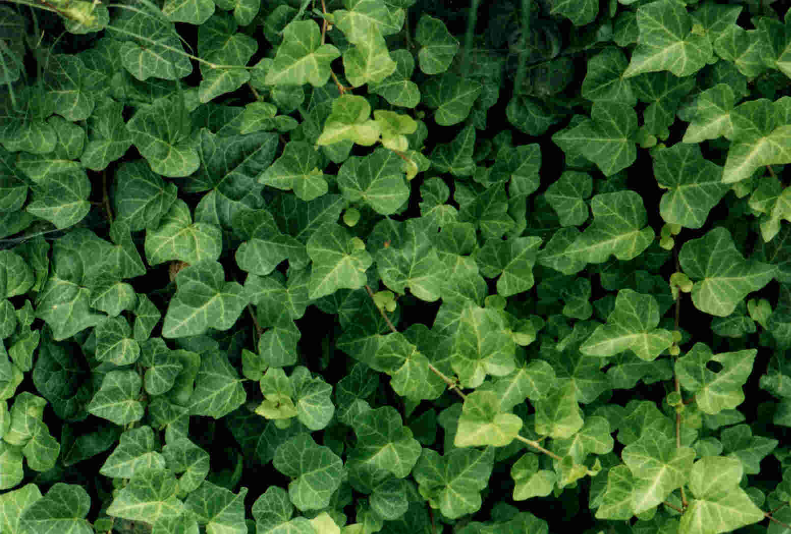 The Poison Ivy, Poison Oak, Poison Sumac Site | The site ...