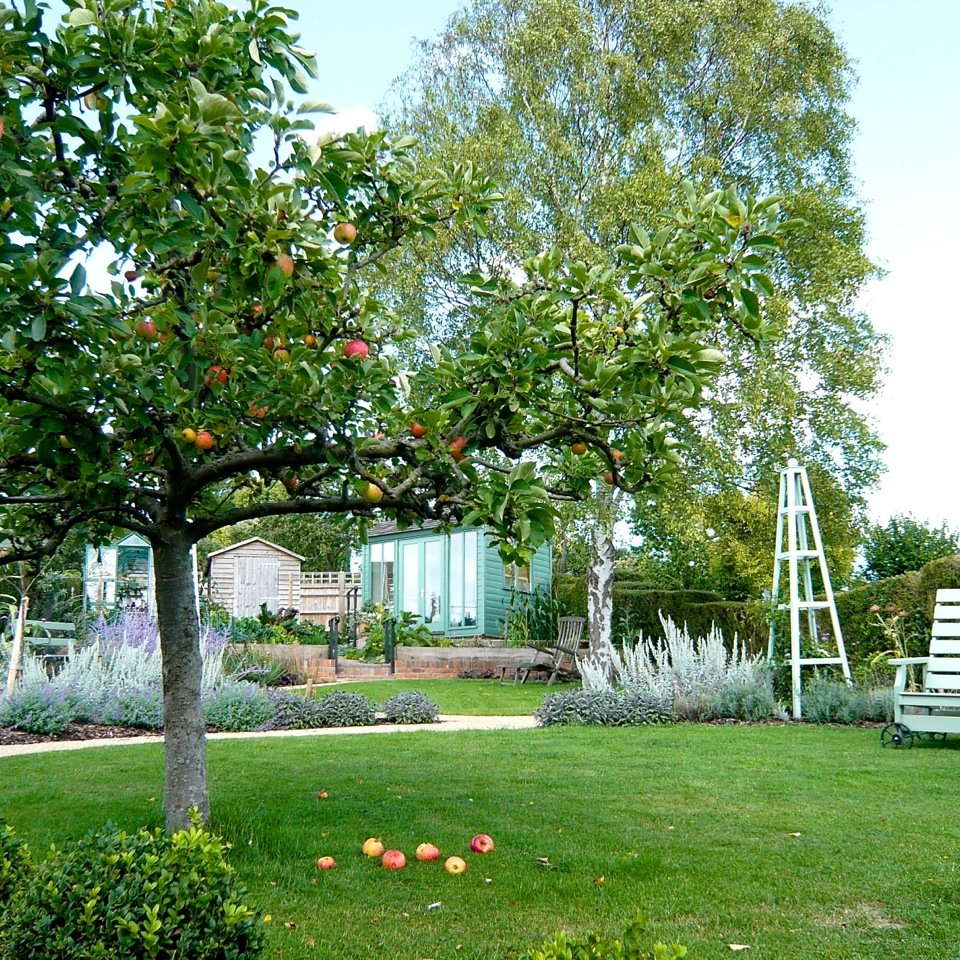 This is the lovely old apple tree we worked the design around in this gardeners garden I designed in Goring on Thames