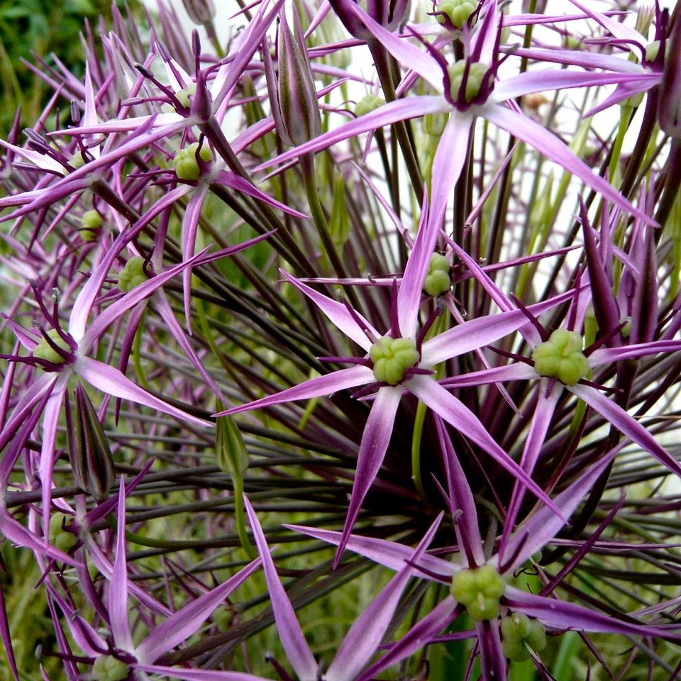 Joanne_Alderson_Garden_Design_Oxfordshire_Courtyard_1