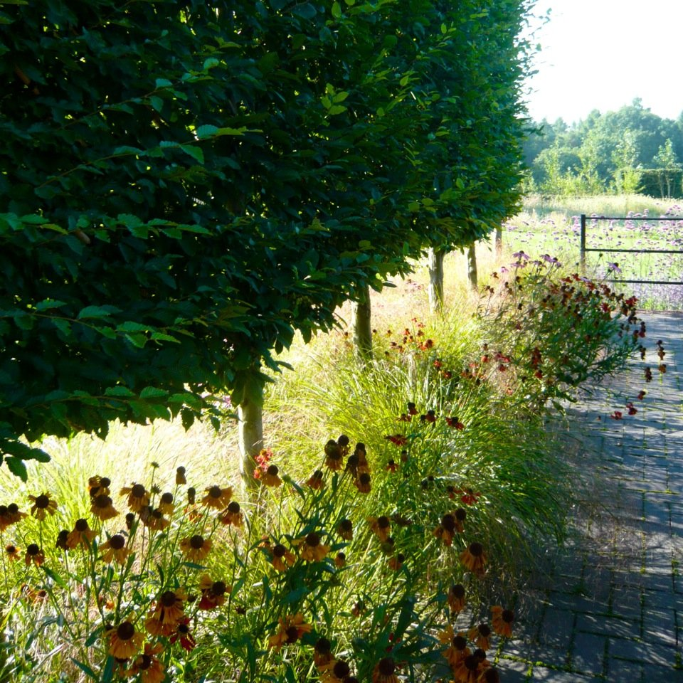 Joanne_Alderson_Garden_Design_Oxfordshire_Estate_4