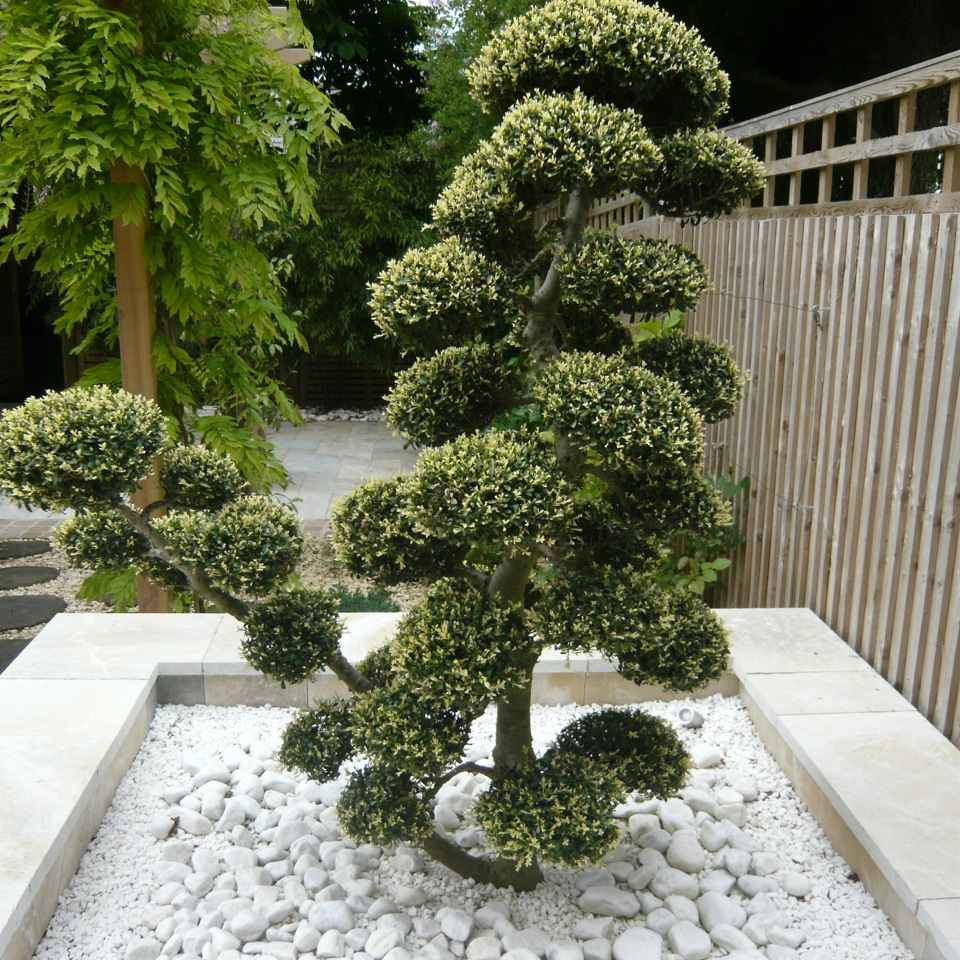 Small zen garden design photograph joanne alderson garden for Garden design oxfordshire