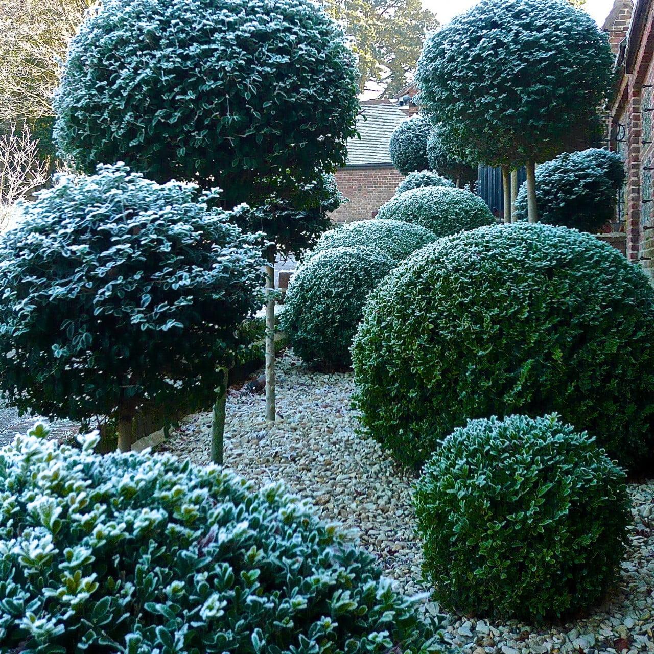 topiary-by-www.joannealdeson.com_