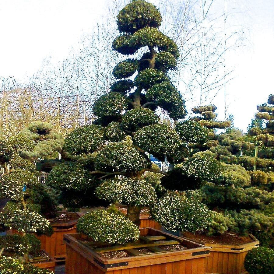 joanne alderson garden design berkshire summer trees 3