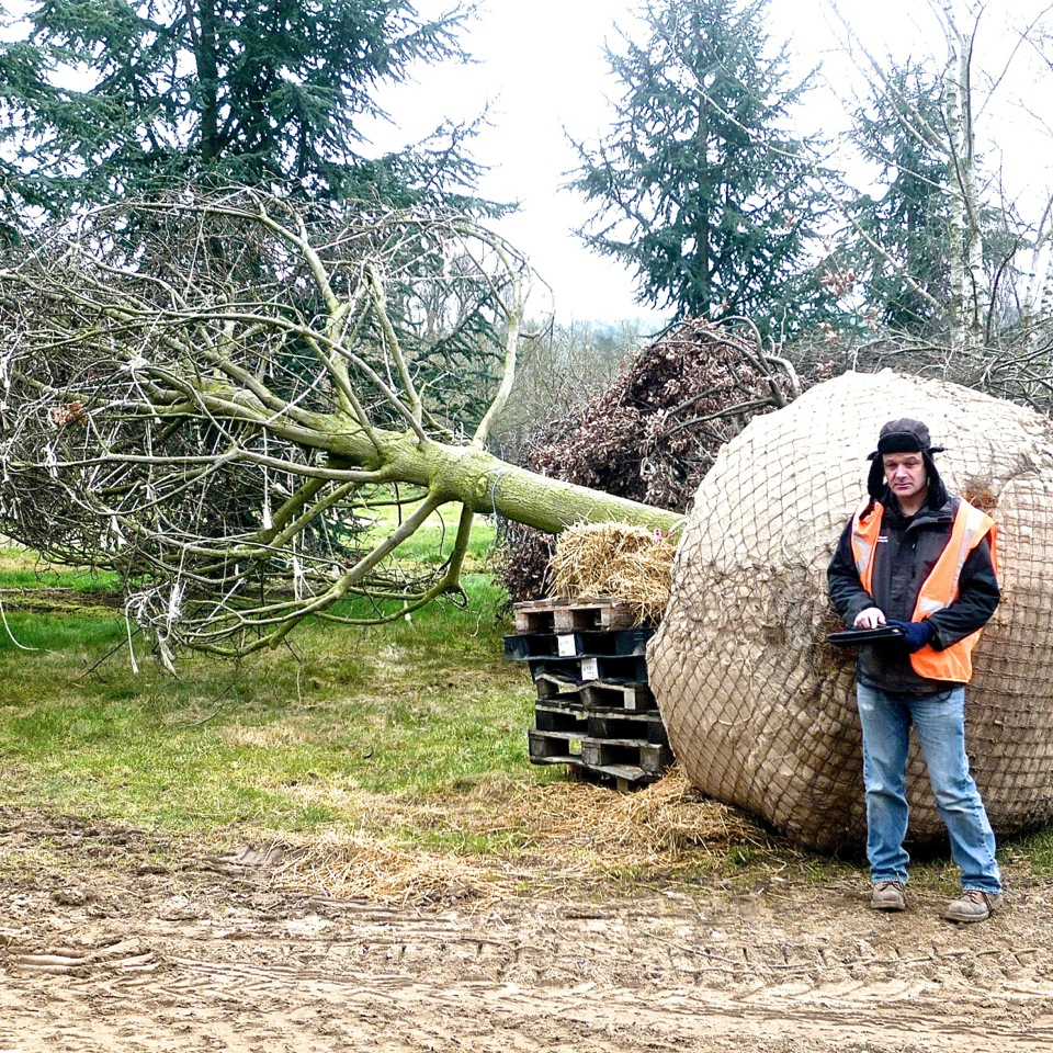 JOANNE-ALDERSON-GARDEN-DESIGN-BERKSHIRE-TREES-5