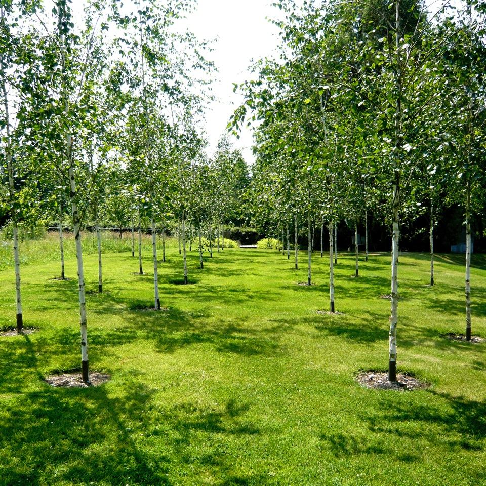 JOANNE-ALDERSON-GARDEN-DESIGN-BERKSHIRE-TREES-6