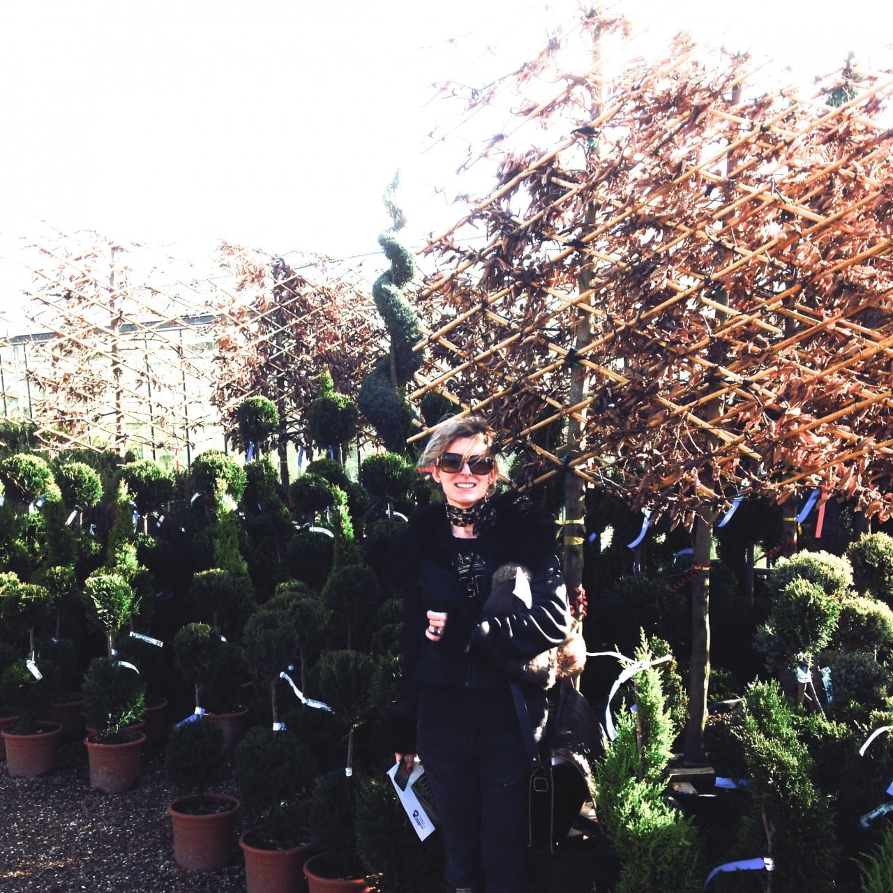This is me at Europlants trade nursery buying pleached hornbeams for one of my clients. We were buying potted trees that day which means they can be planted at any time of the year.