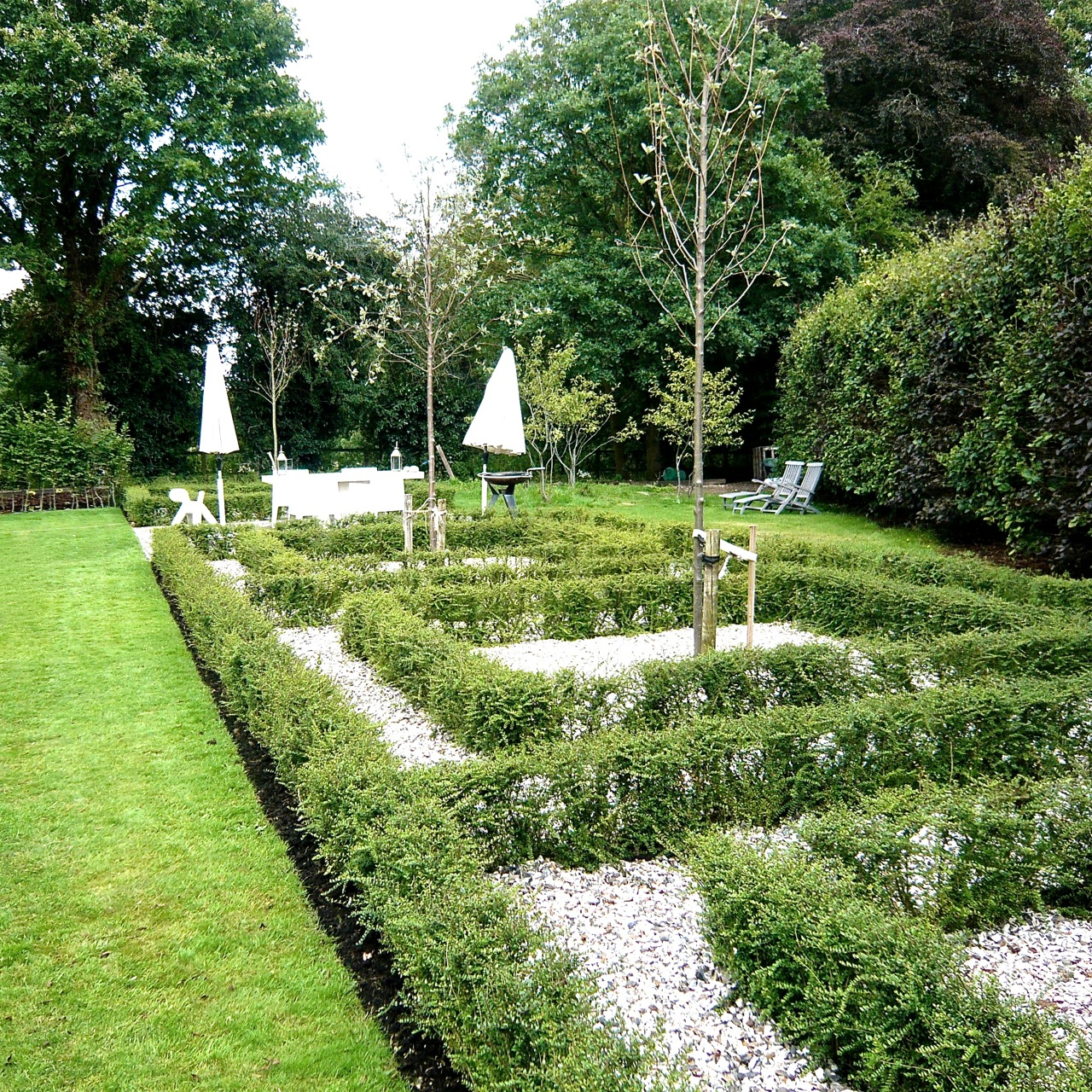 A parterre in the making here at home jo alderson phillips for Parterre garden designs