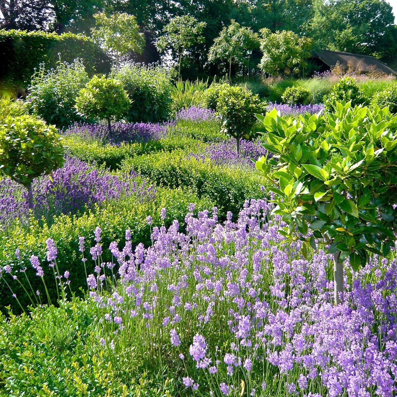 Shade Cottage Garden Plan