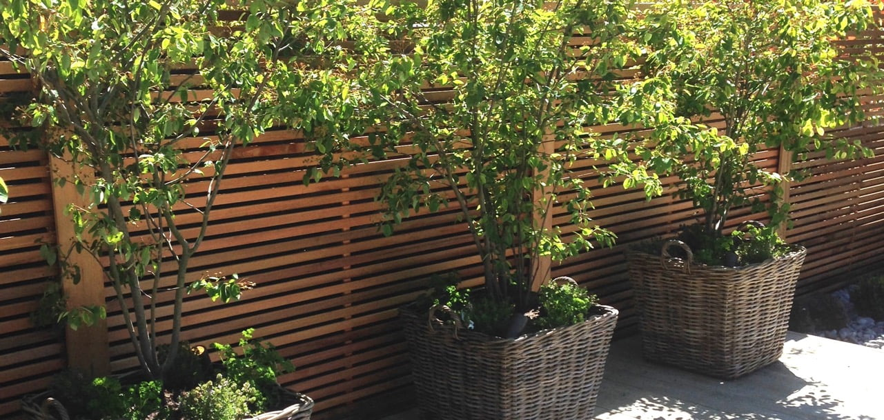Baskets of Amelanchier trees & cedar strip fencing in this modern garden I designed for a barn conversion