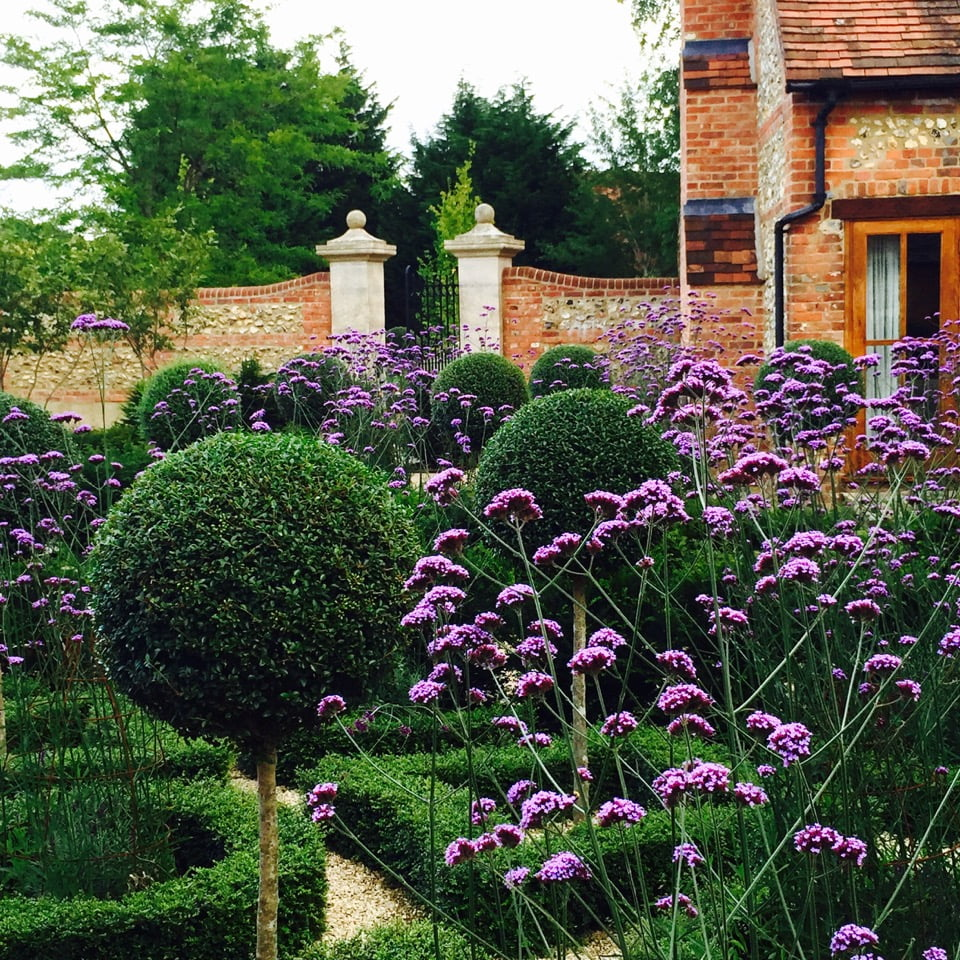 This shows the topiary & verbena bonariensis in the knot garden I designed