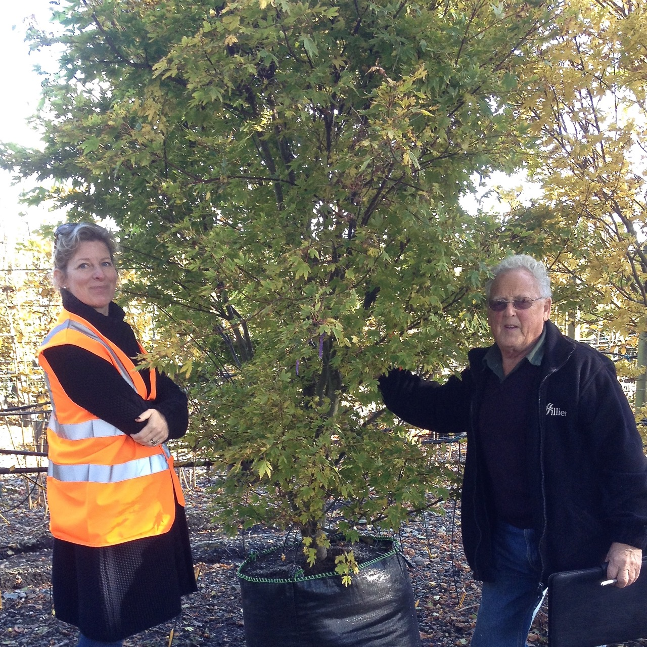 JO Alderson Phillips with Ricky of Hilliers tree nursery choosing a specimen acer