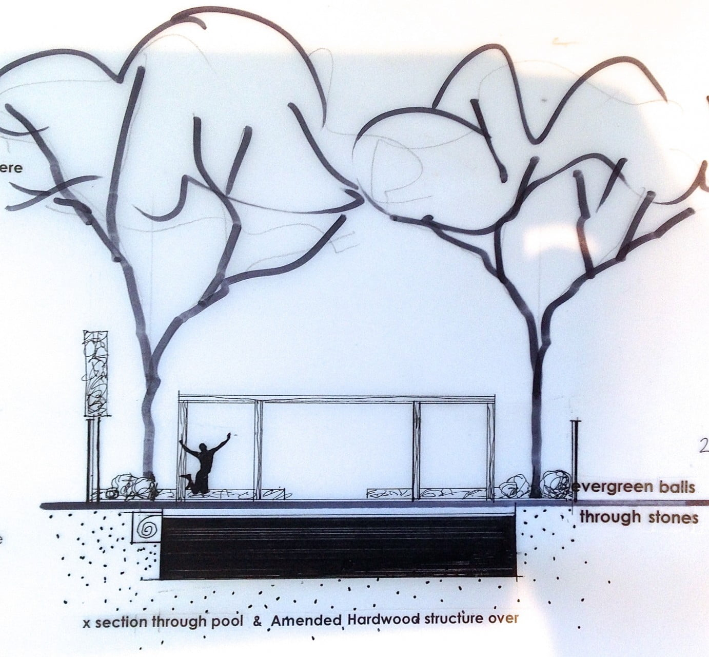 This is my drawing showing a cross section through the pool, the contemporary shade structure & the pleached trees