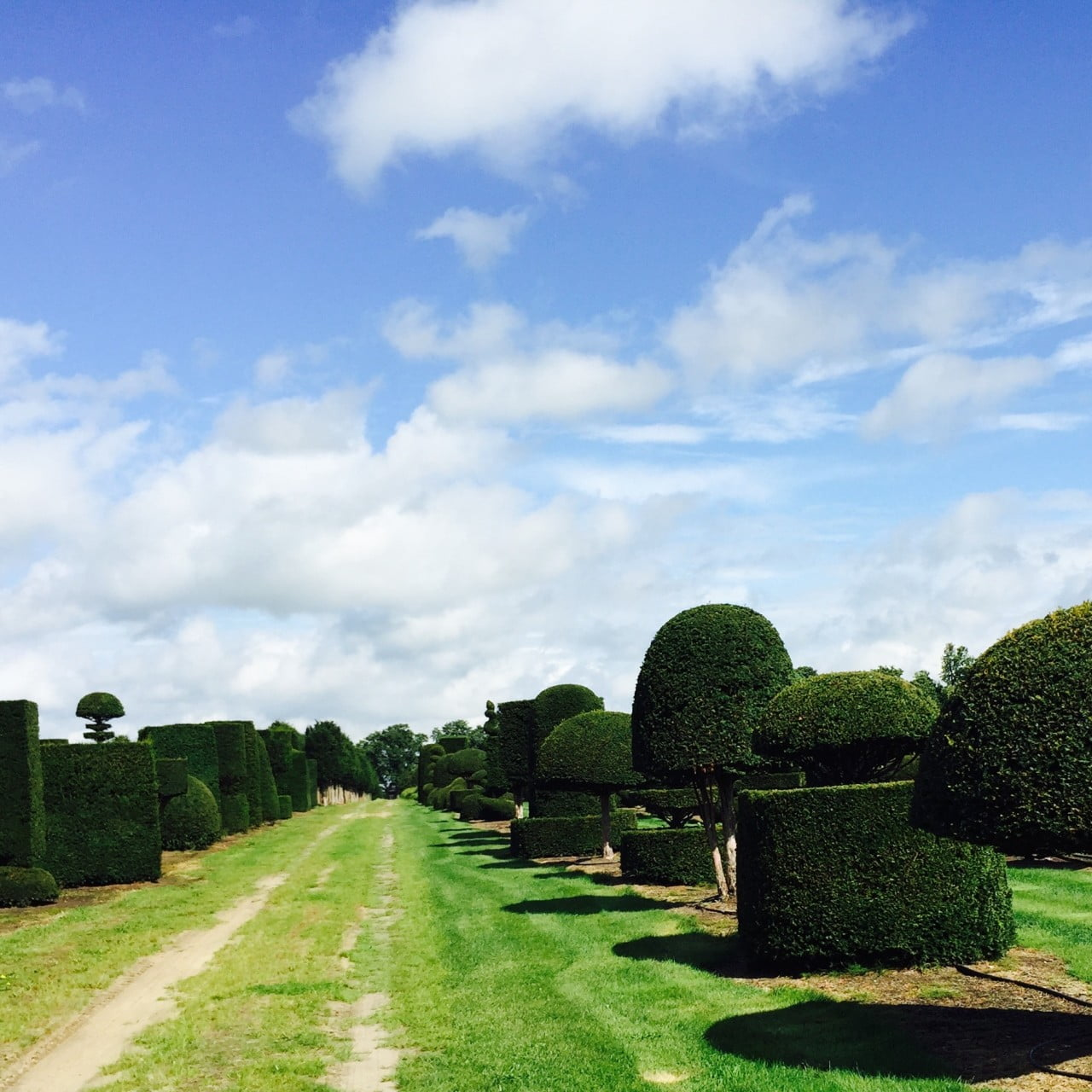 Here we are selecting topiary for clients from these fantastic yew specimens