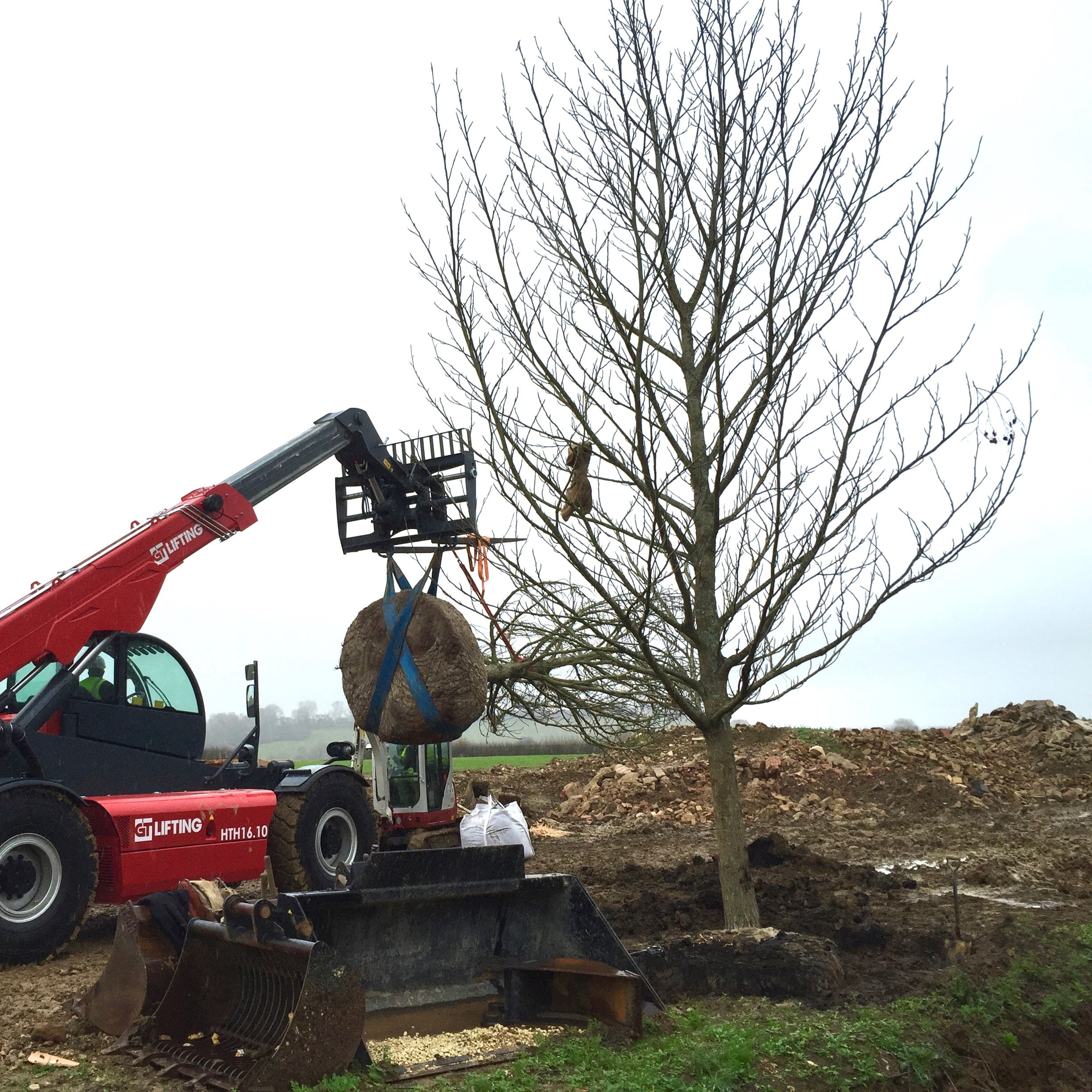 mature tree planting for Jo Alderson Design