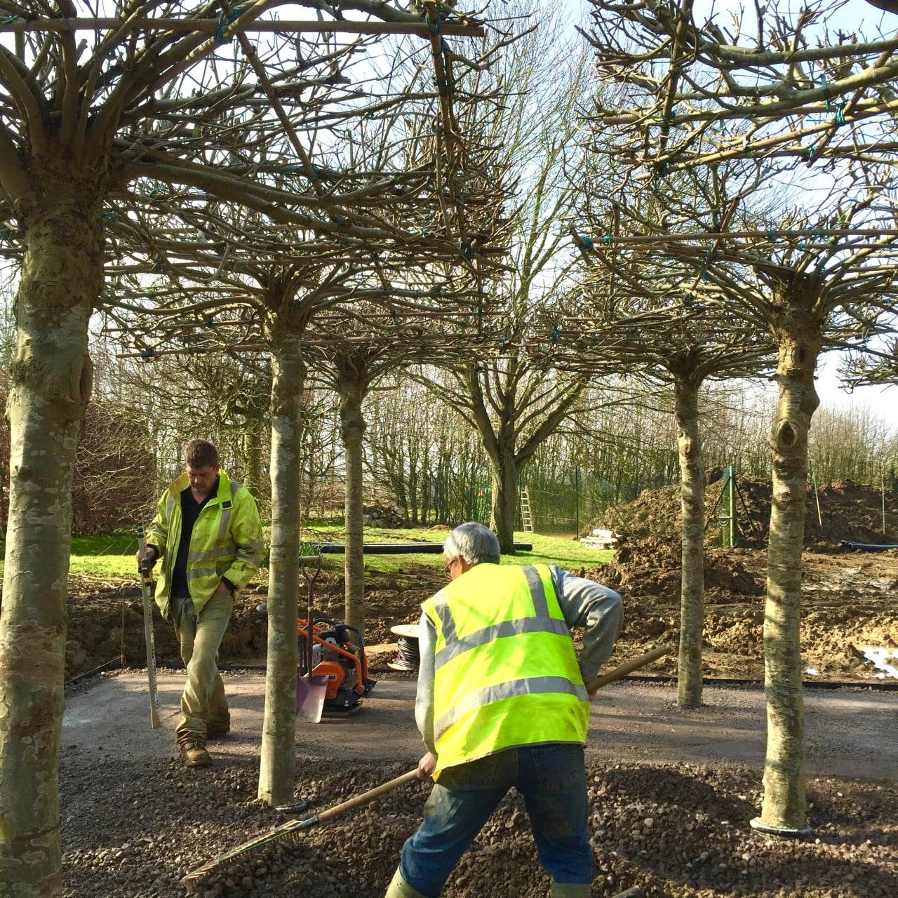 Planting a grid of roof trees for my clients Grant & Emma in the Cotswolds. They provide shade & structure in a garden