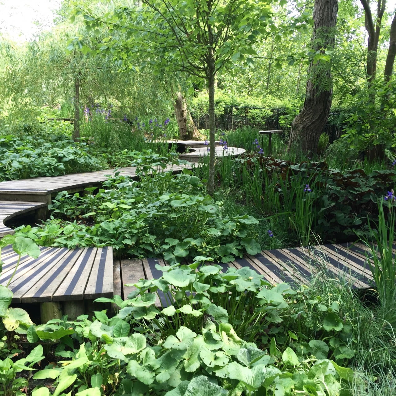 This is the boardwalk & bog garden with pretty ribbons of bog plants I designed for my client Kane. These are non slip strips
