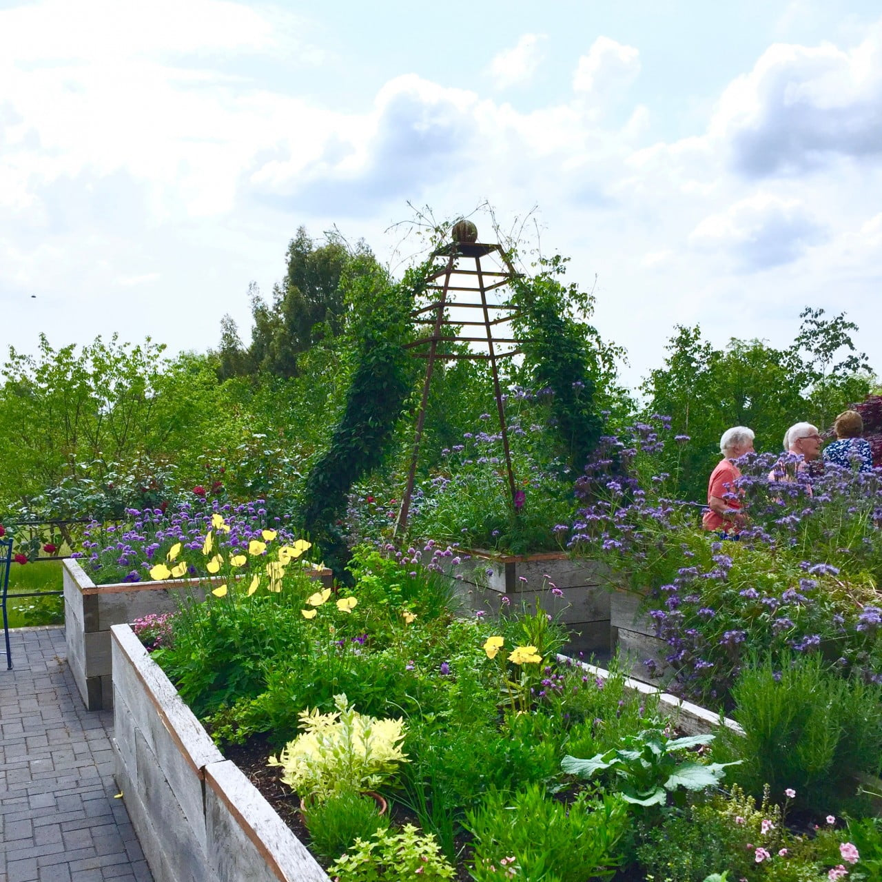 This is the cutting garden with raised beds I designed for Jane. I also designed the great frames for climbers which have worked really well