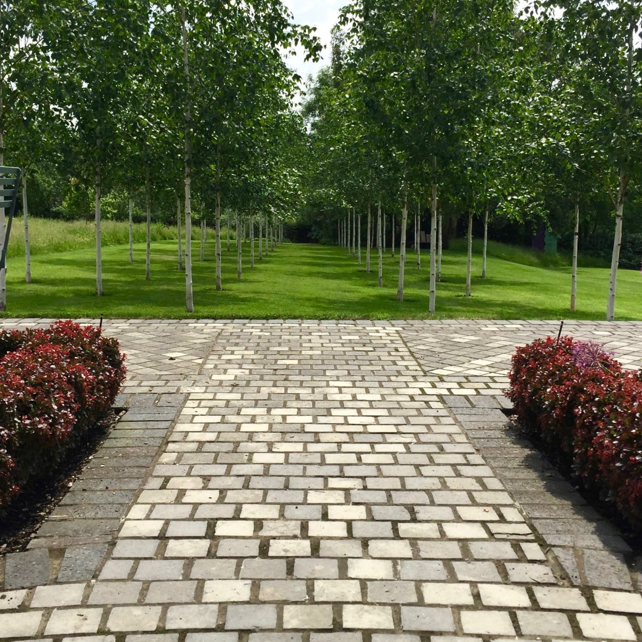 This is the view down one of the silver birch avenues I designed