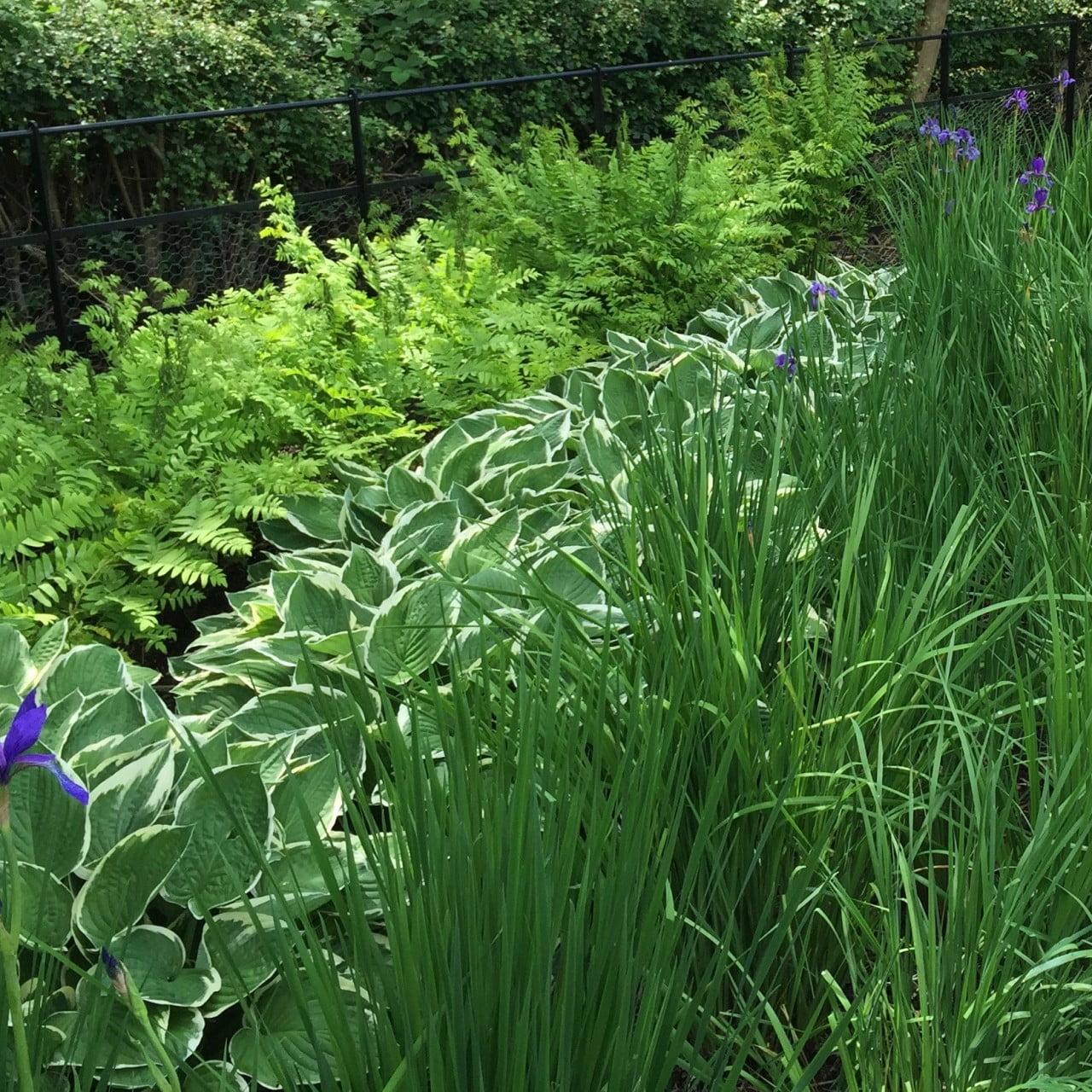 Ribbons of bog plants for my client Jane beside her boardwalk