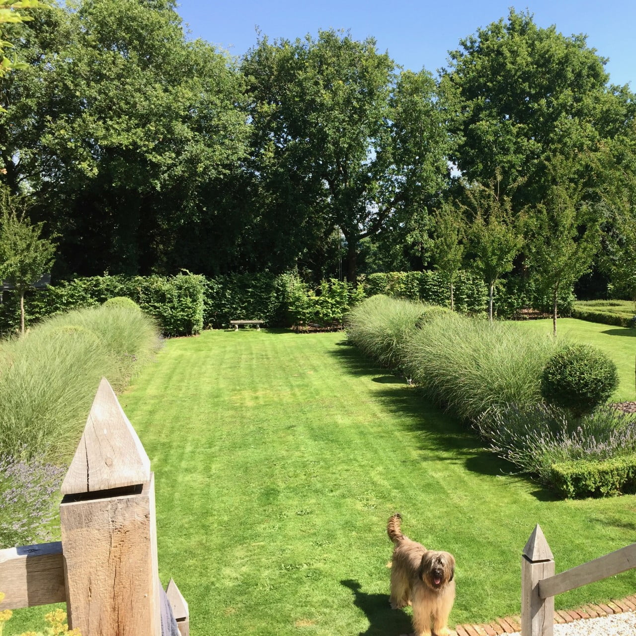 This is my own formal large garden here in Newbury Berkshire. We have lines of cherry trees & formal beds with ornamental grasses & topiary.It is dog friendly with plenty of space to play too