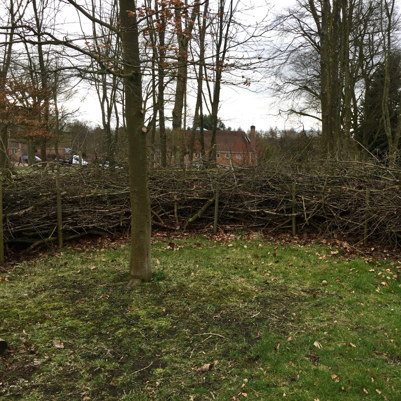 This is an eco hedge for a woodland garden. It provides a home for hedgehogs & creates a lovely structure & wind break around this small oak tree