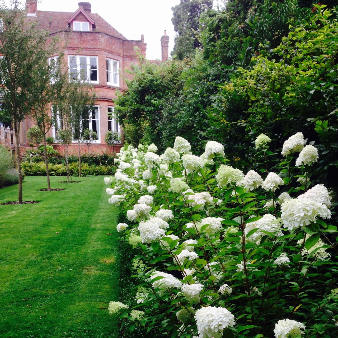 This is our large garden with mass planting of hydrangea limelight down the boundary for lovely fresh lime green colour