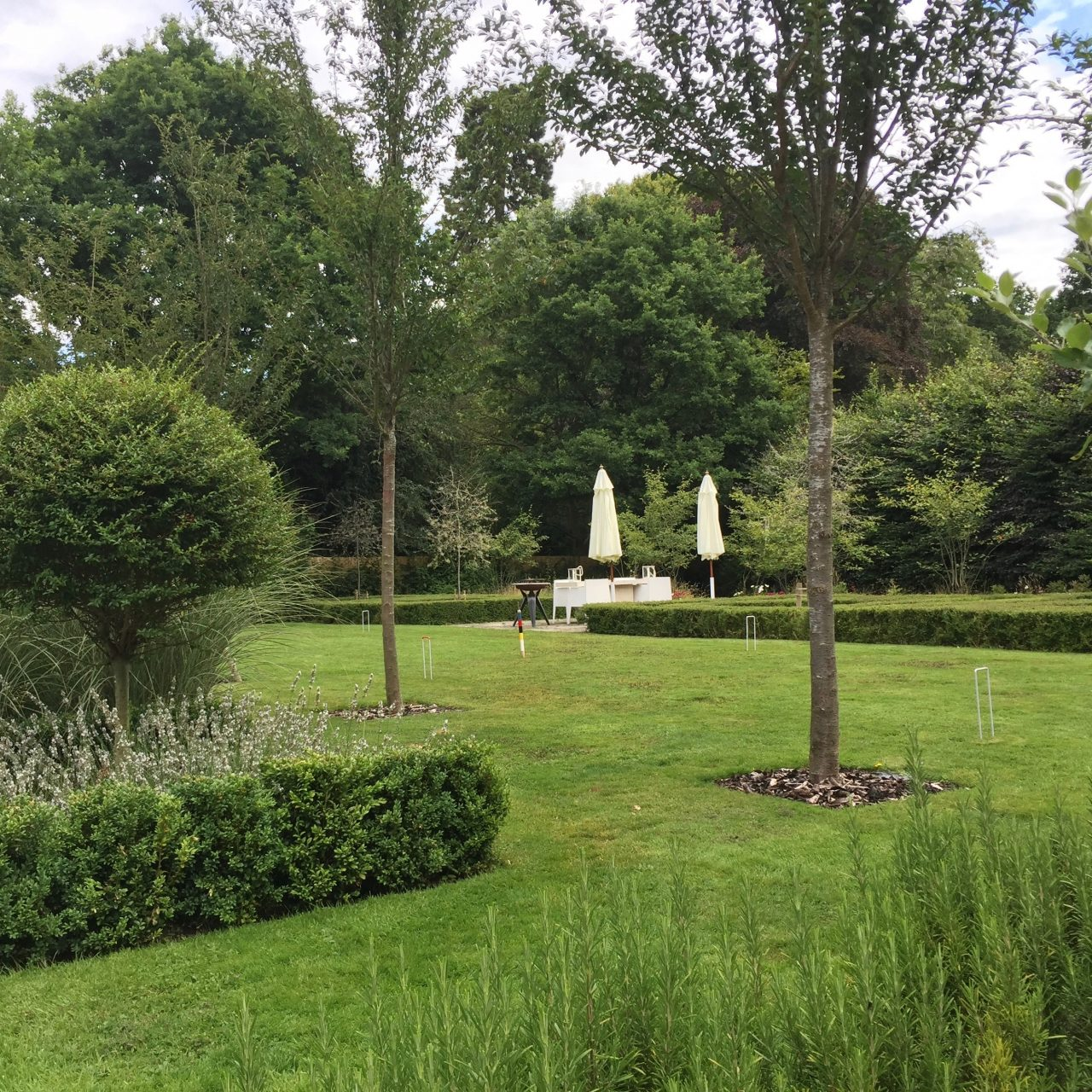A view of my own garden looking at the parterre with topiary squares & Pyrus salicifolia (weeping pear) trees