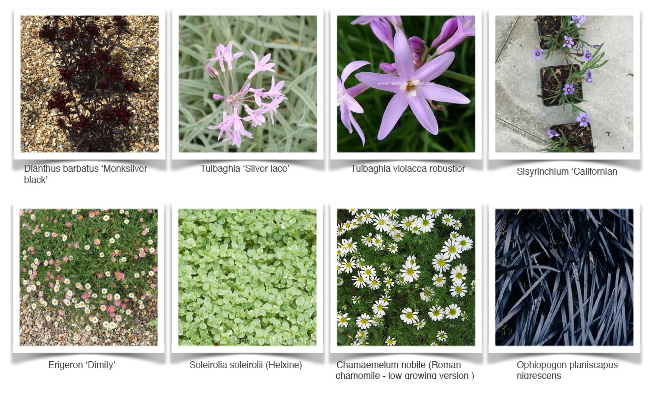 Planting ideas by Jo Alderson Phillips for a gravel garden