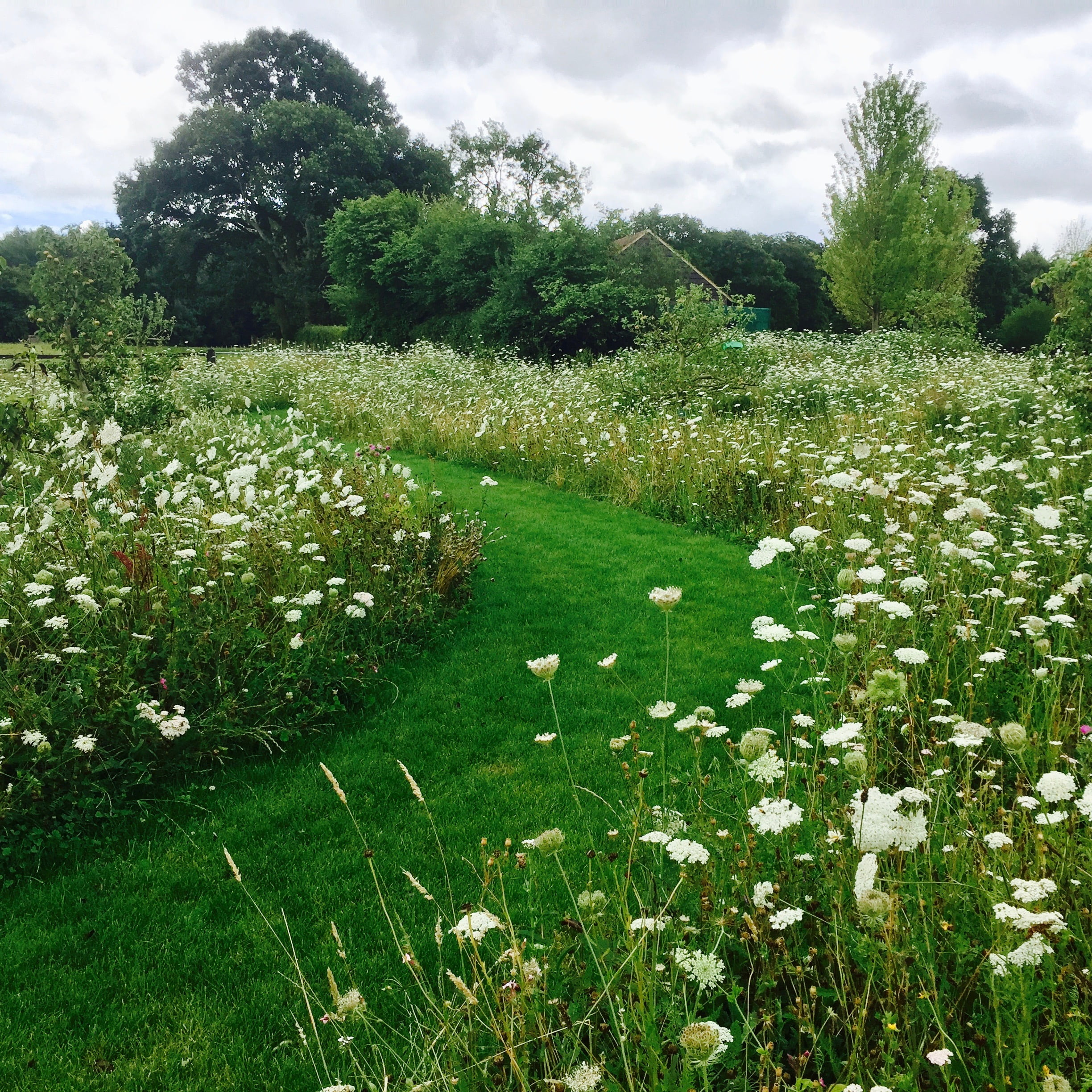 This is a new wild flower meadow with a wide mown path