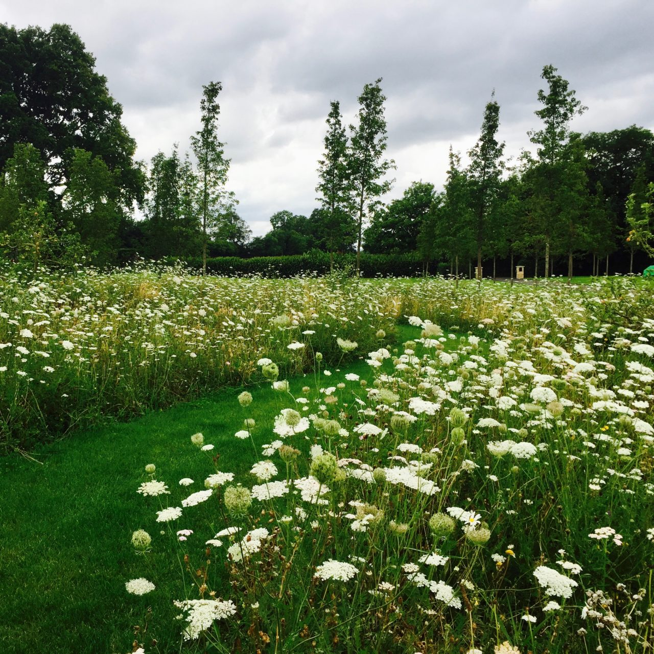 A beatiful wild flower meadow in a scheme by Jo Alderson Design with a wide mown path