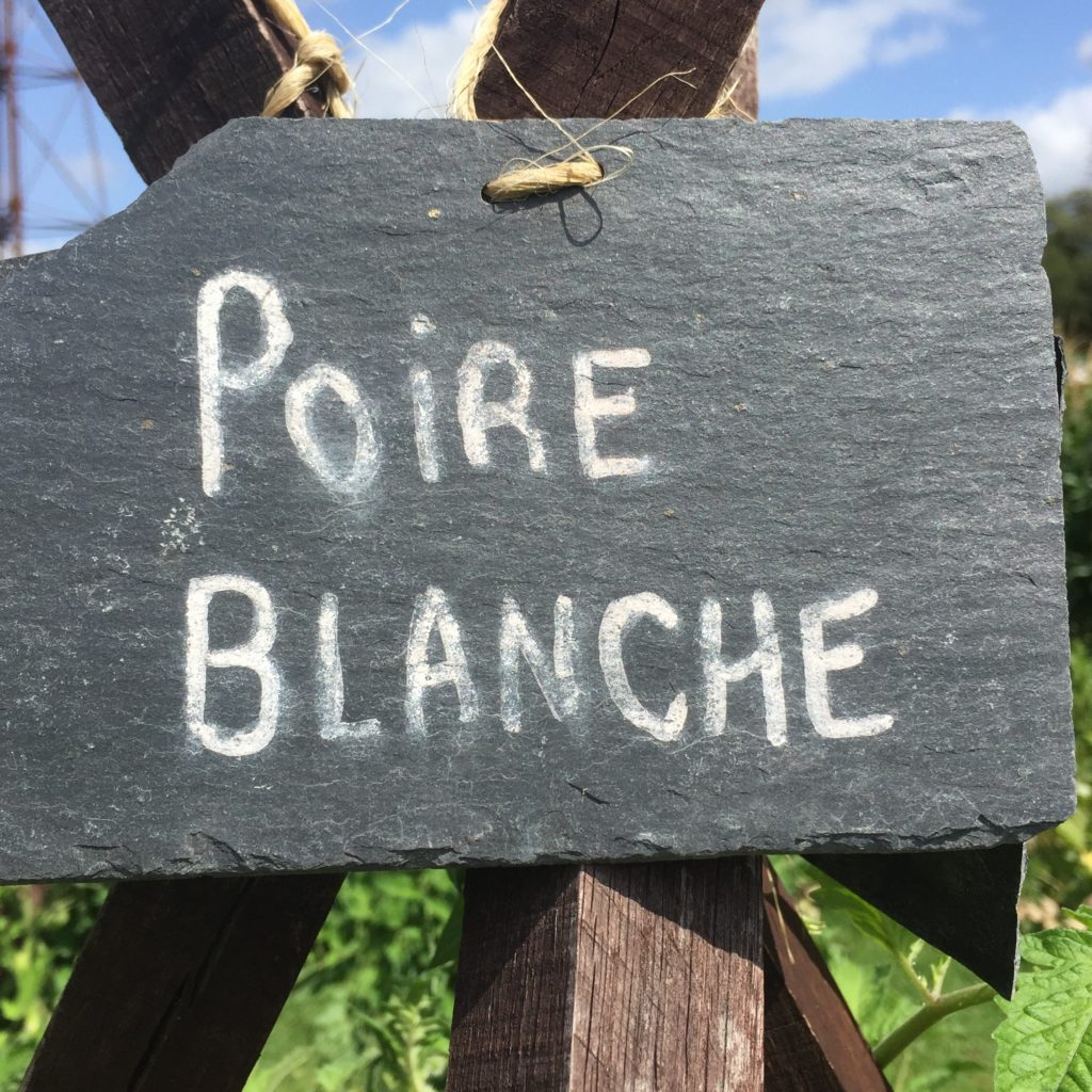 Poire blanche tomato sign in the kitchen garden at Chateau bourdaisiere