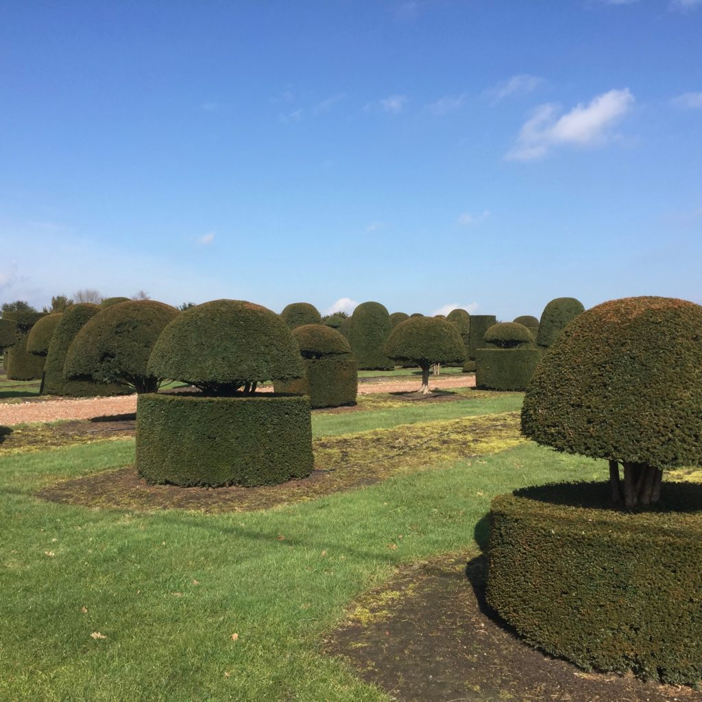 Beautiful yew topiary sourced in Belgium by Jo Alderson Phillips @ bjoanne Alderson Design