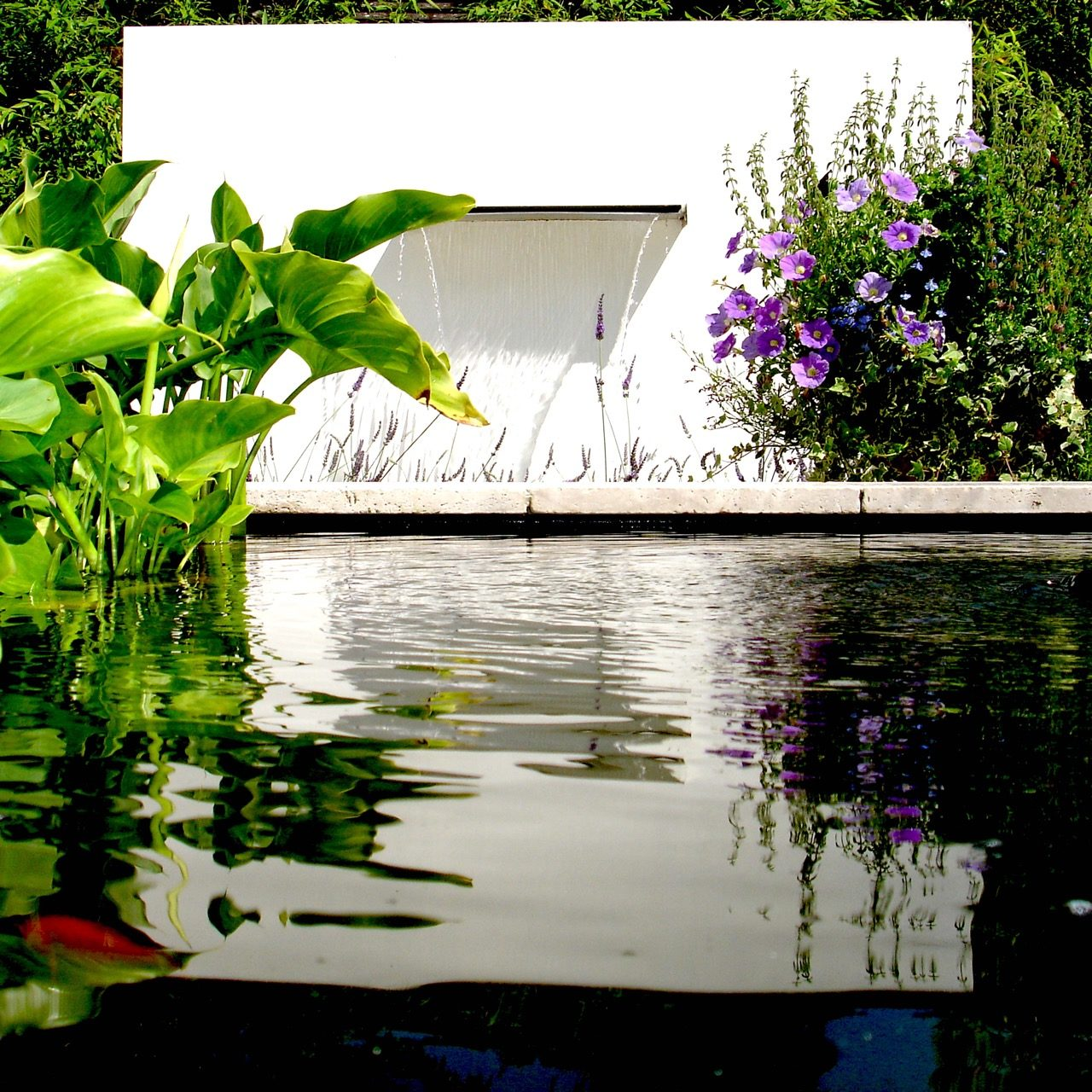 Contemporary garden designed by Jo Alderson Phillips @ Joanne Alderson Design