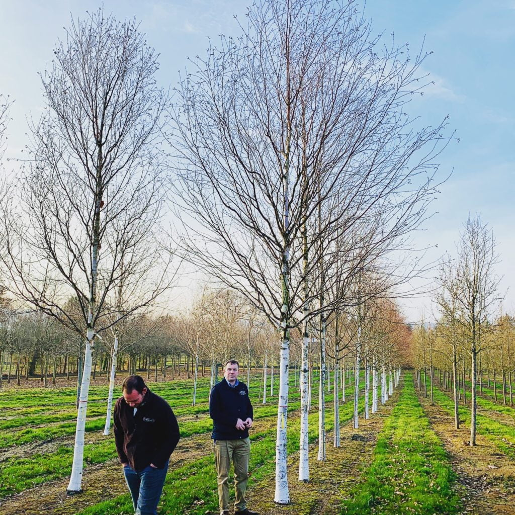 Choosing trees at Hilliers - this time for our own garden