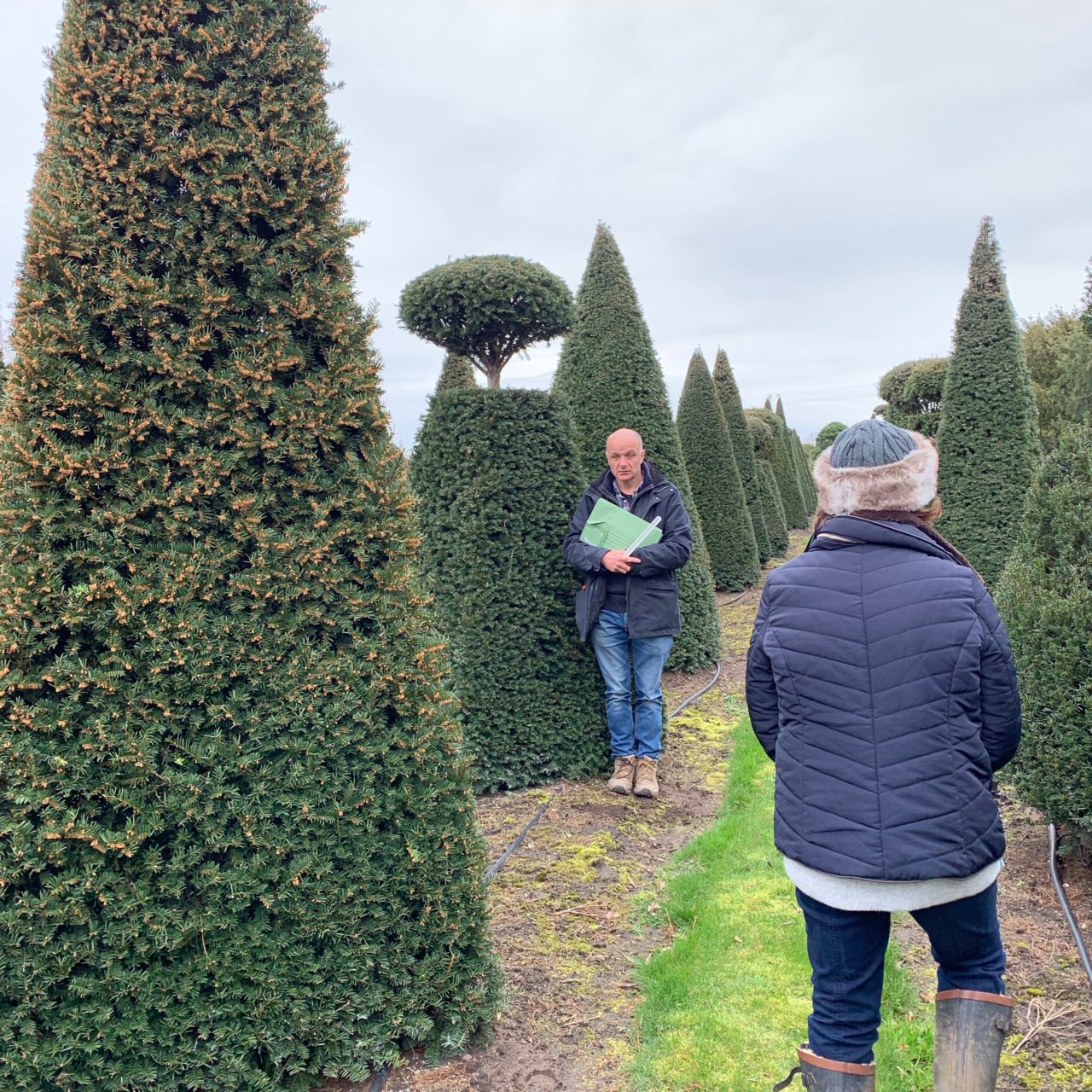 We go to Belgium once a year or so to buy specialist topiary such as this
