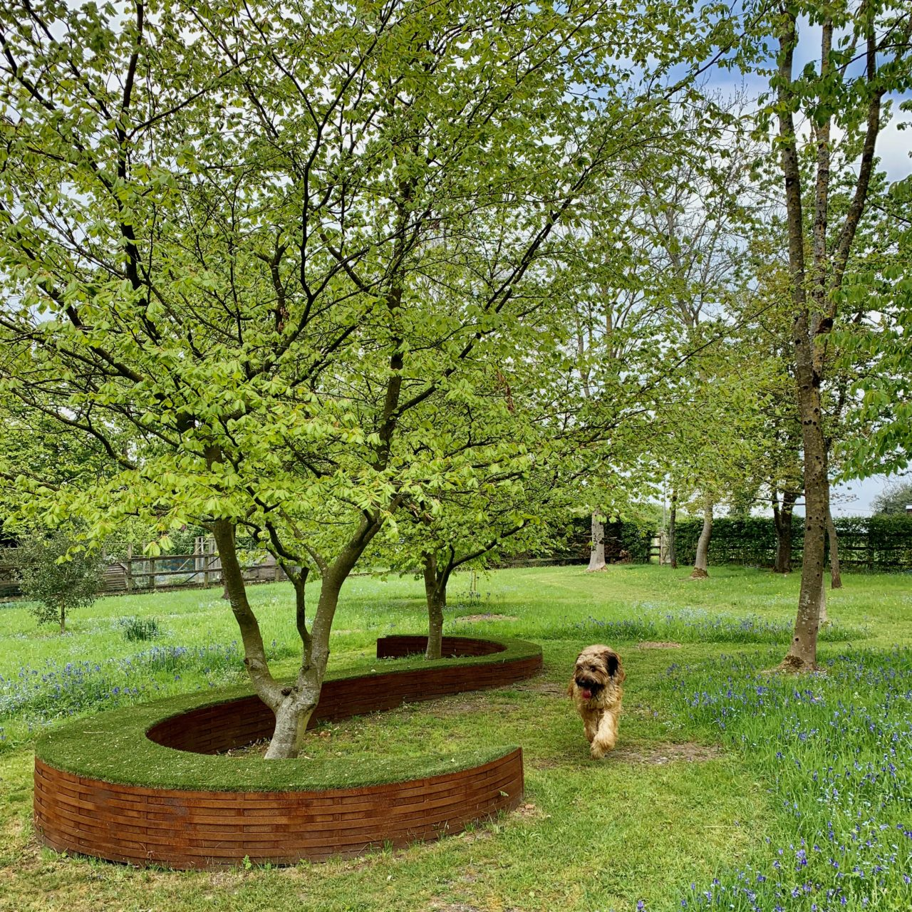 Part of the woodland garden seen here with my dog Bruno. designed by Jo Alderson Phillips Joanne Aldeson Design