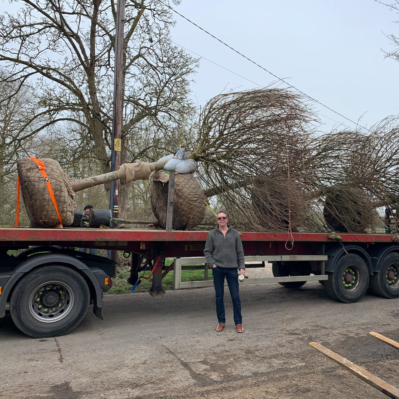 trees on the lorry